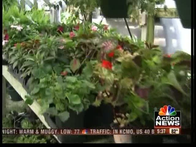 How to keep your plants and grass alive during a heat wave 41 - Heat tolerant plants keeping gardens alive ...
