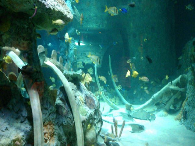A Special Sneak Peek Inside Sea Life Kansas City Kshb