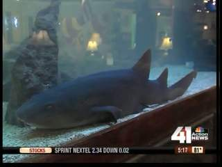 Shark moved from furniture store