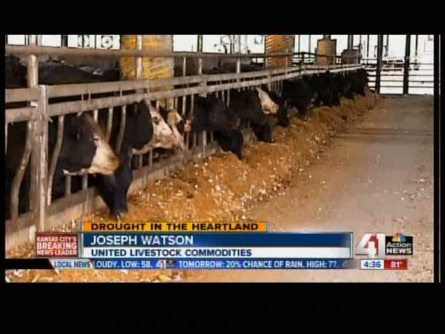 Cows Fed Candy as Feed Prices