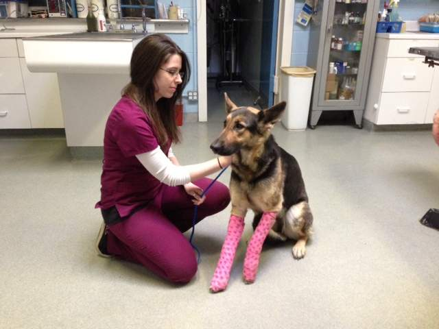 KSHB: Lindey German Shepherd thrown from overpass
