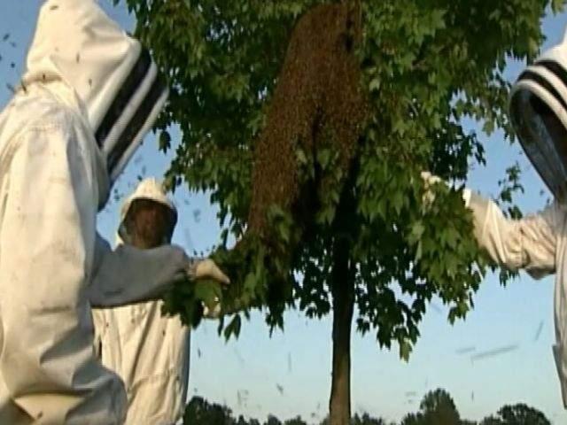 Bees swarm Pennsylvania truck stop