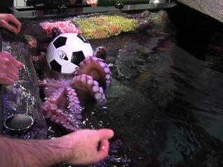 Matt Besler meets octopus named after him