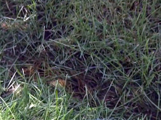Tips from Toby: Disease prevention for your lawn