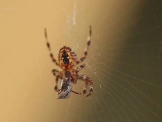 Tips from Toby: Home pest control the safe way