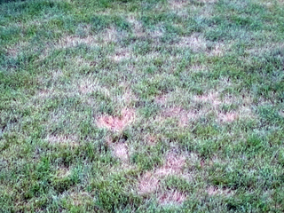 Tip from Toby: What's the heat doing to my lawn?
