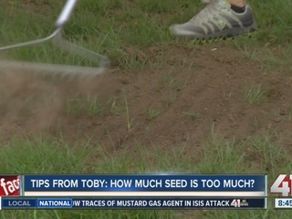 Tips from Toby: How much seed is too much seed?