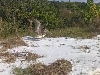 VIDEO: Pelican tangled in fishing line rescued