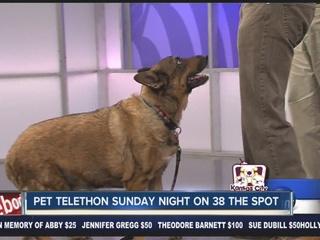 Kansas City Pet Telethon airs Sunday night