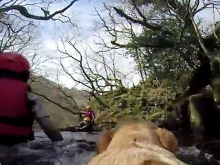 Daredevil dog follows its owners everywhere