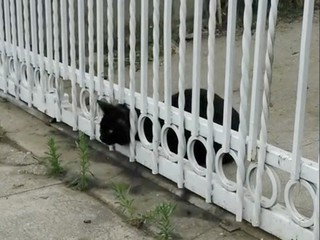 VIDEO: Poor cat gets stuck in a fence