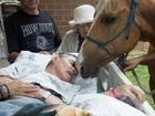 WATCH: Dying veteran bids his horses farewell