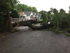 Large fallen tree causes detour in KCK