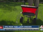 Tips from Toby: How to prevent lawn diseases