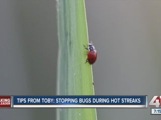 Tips from Toby: Stopping bugs during hot streaks