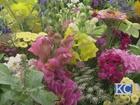 Celebrating American Flowers Week