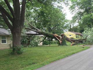 Tree smashes roof, insurance may not cover it