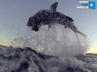 VIDEO: Flying Great White shark surprise attack