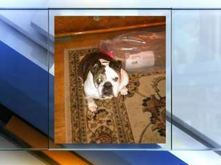 Thief shoots dog during home burglary