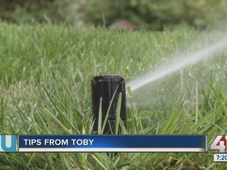 Tips from Toby: Keep your yard healthy in July