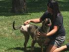 Pet owner: Misdiagnosis led to amputated leg