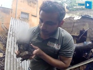 VIDEO: Puppy rescued from house collapse