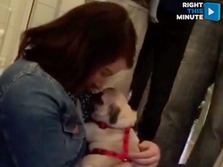VIDEO: A pug-sized puppy surprises Berlin woman