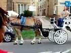 VIDEO: Carriage ride surprise!