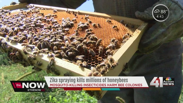 Aerial spraying to eliminate mosquitoes kills millions of honey bees