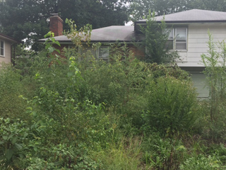 KCMO houses cited for out-of-control weeds