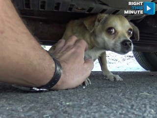 Cheeseburger helps rescue little dog