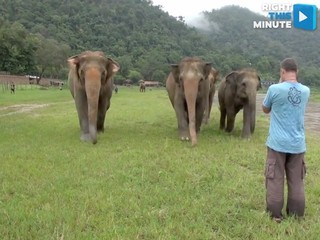 VIDEO: Elephants respond to calling their names