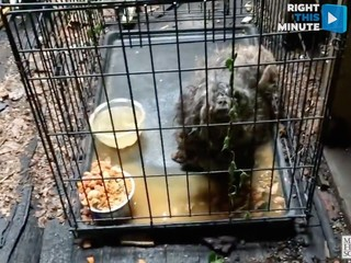 VIDEO: Pooch rescued from pounds of neglect