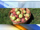 Yelp KC names local spots to get your apple fix