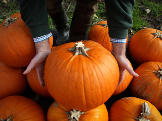 Best places for all things pumpkin in KC