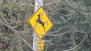 Deer collisions on the rise in MO and KS