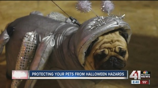 Protecting your pets from Halloween hazards