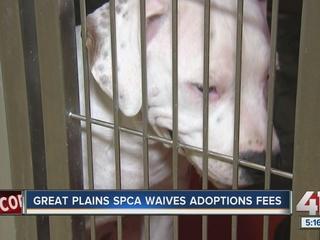 Great Plains SPCA hosting adoption drive