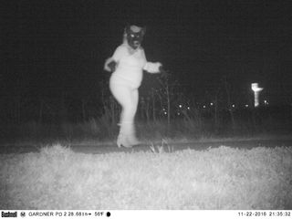 Gardner trail cameras show 'wild things'