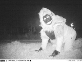 Trail cams show 'creatures' invading Gardner