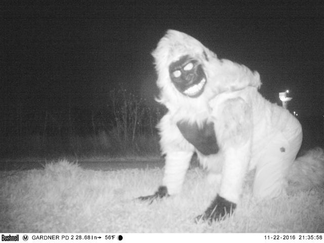 Wildlife cameras capture photos of jokers dressed as lions