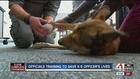 Official training to save K-9 officer's lives