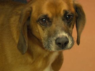 Animal shelter in MO gets rid of gas chamber