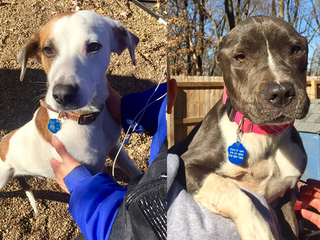 Volunteers build houses for neglected dogs