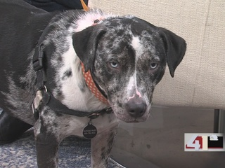 Wayside Waifs Celebrates A Great Year