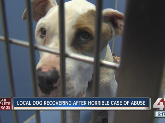 Local dog recovering after horrible case of abuse
