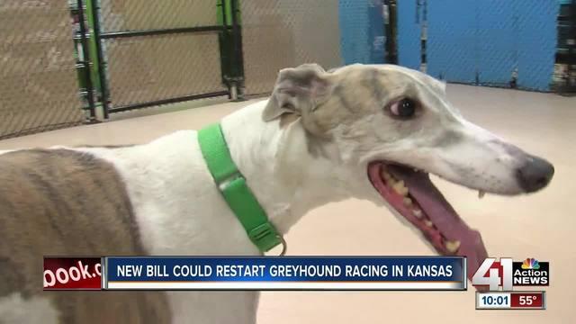 Some fear Kansas bill may bring back dog racing