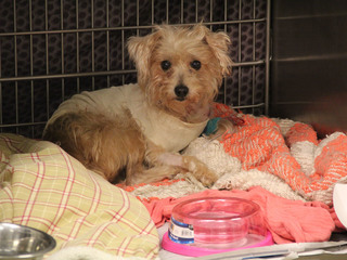 Humane Society rescues MO dog stabbed 19 times
