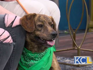 Blue Valley West to hold Paws for a Cause event