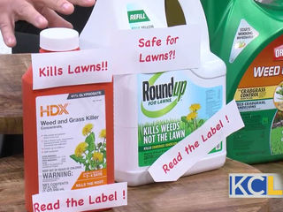 How to get rid of pesky weeds